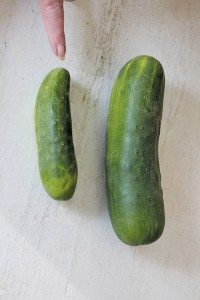 7. Cucumbers Where to buy: Grocery stores and roadside produce markets or farms What to look for: No longer than six to seven inches. Dark green in color. With a diameter of no more than three inches. Smaller is best. Don't buy if: Pale in color or yellowish green. Longer than eight inches.  Thicker than three inches. Wrinkled or soft or flexible.  How to prepare: Peel, slice in medallions and sprinkle with salt or place in a bowl and add cider vinegar.