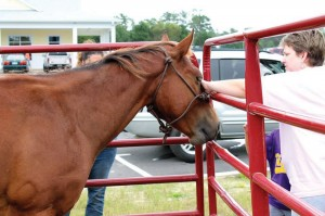 Ranger, a LOPE Rescues horse being trained by Lauryn Zepeda, accepts loving pets. Courtesy photo