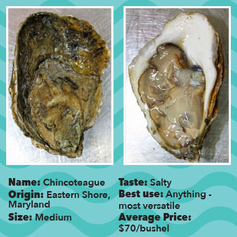 Oyster-Chinco