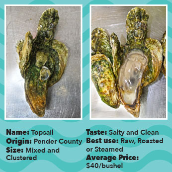 Oyster-TOpsail